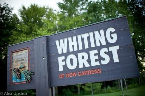 whiting-forest